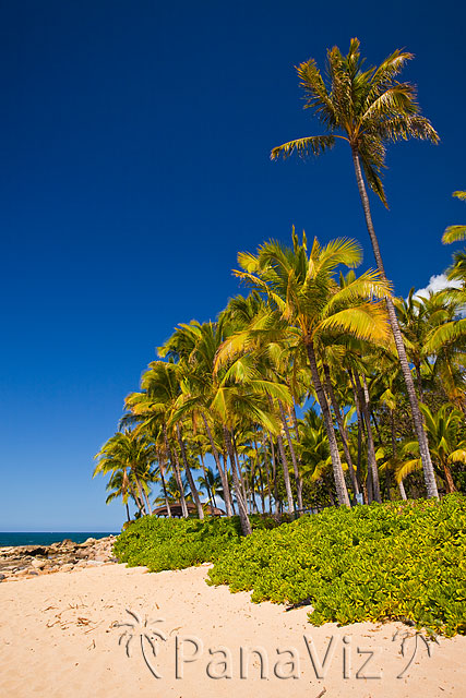 Hawaii and Palm Trees
