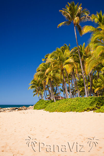 Hawaii Beach Scene