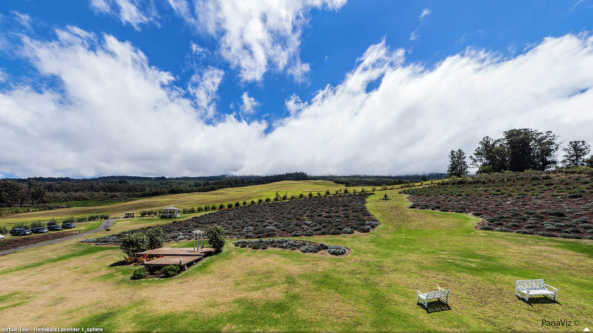 Kula Lavender Farms Maui Panorama